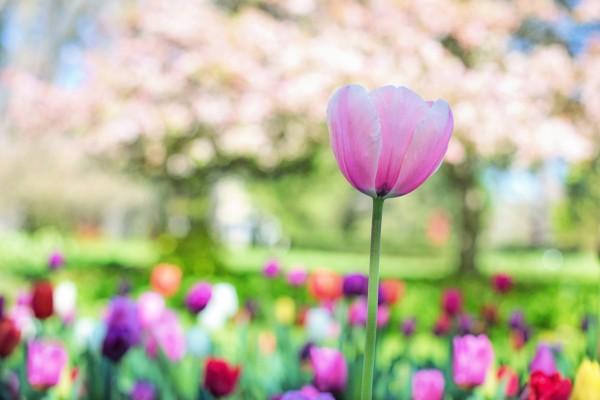 HVAC Spring Savings