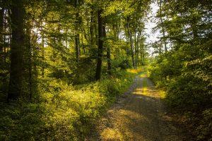 Stop cedar fever in 2019